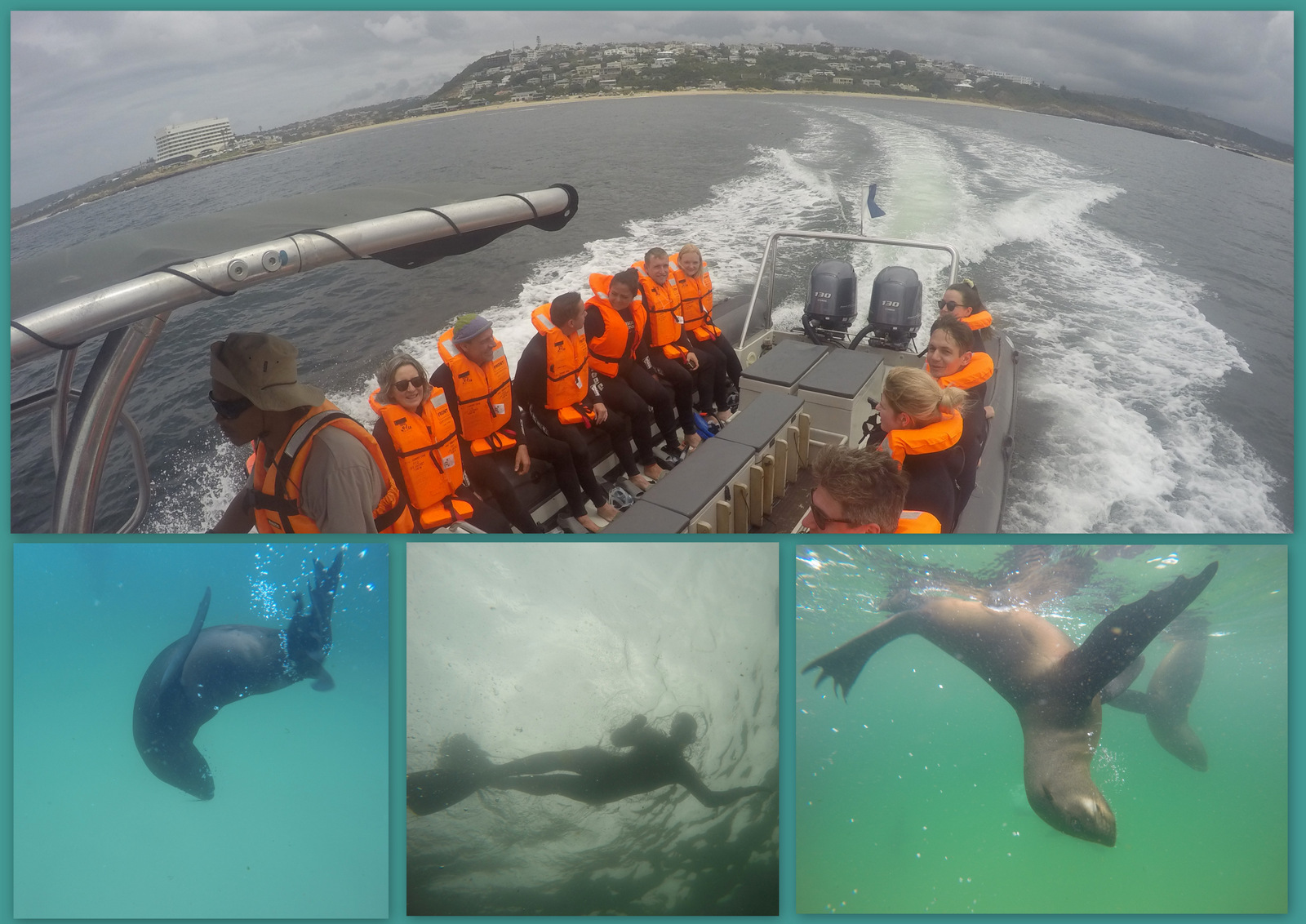 Swim with the Seals - OffShore Adventures
